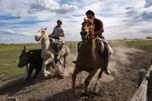Gianluca Colonnese, Sol de Mayo - El gaucho y la ganaderìa