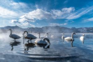 Il Lago dei Cigni - Roberto Manfredi