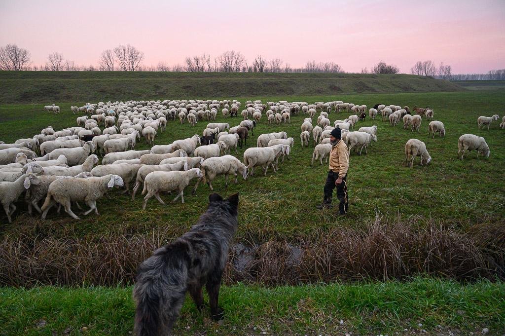 Sergio il pastore - Roberto Telloni